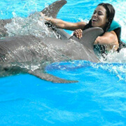 Dolphin Swims